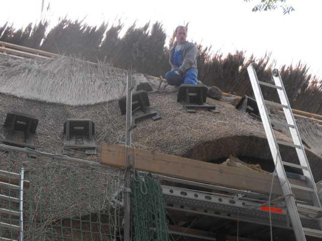 Reetdachdecker während der Arbeit