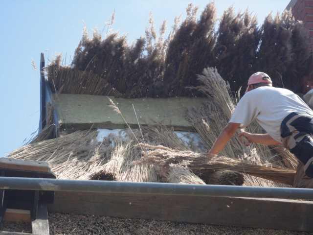 Auslegen des Reets durch unseren Reetdachdecker
